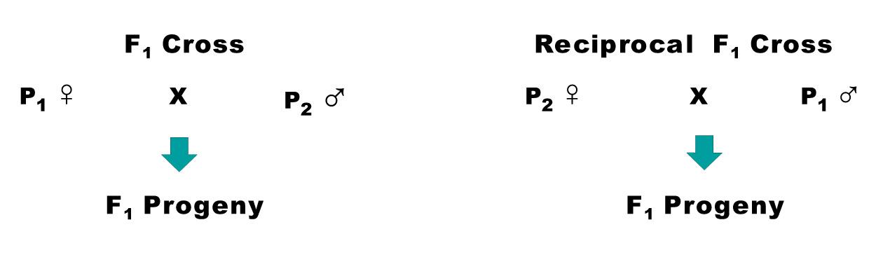 reciprocal cross biology